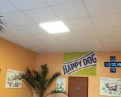 Sicc Állatorvosi Rendelő LED Korszerűsítés